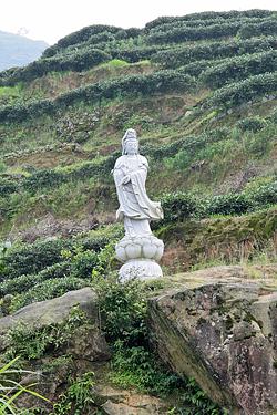 Fujian+3529-lg