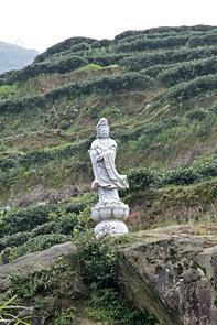 Fujian-3529-smB
